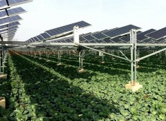 Agriculture Power Generation